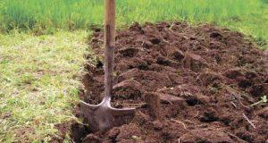 Подготовка почвы под виноград