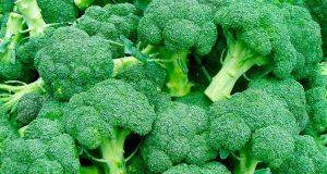 Капуста брокколи, выращивание