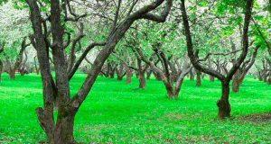 Удобрение для фруктовых деревьев